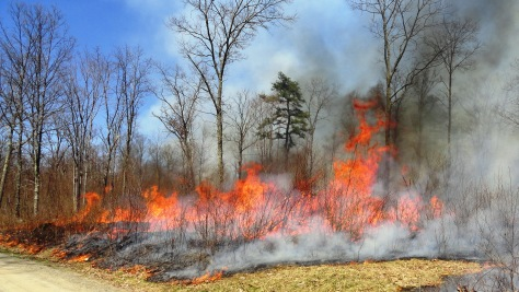 Prescription Burn in the Delaware State Forest