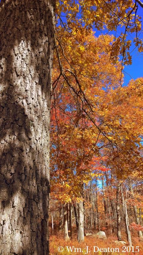 Ambush Autumn