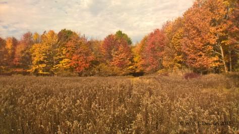 Old Dingman's Field