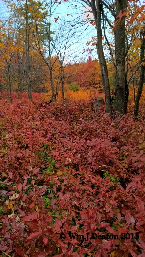 Woods & Bush